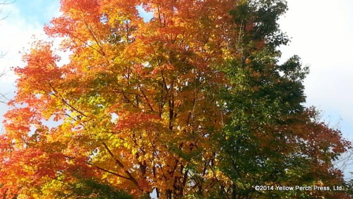 autumn Put in Bay