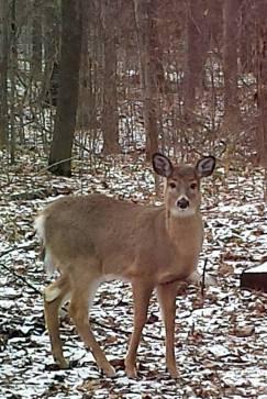 Deer Put in Bay