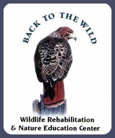 Wildlife Rehab